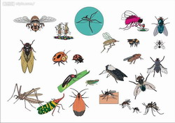 Life Cycle of Fly Parasite